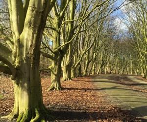 Jaarlijkse bomenkap in Amsterdamse Bos weer van start