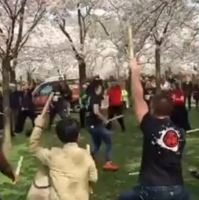 'Cherry Blossom Festival' gaat terug naar de basis