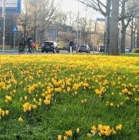 Vrolijke kleurexplosie in Amstelveen
